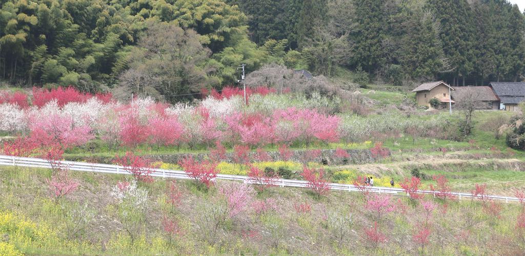 花桃の景色